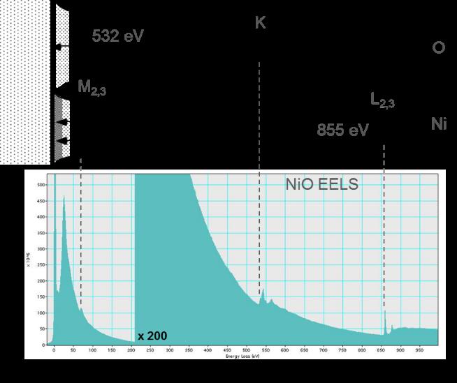 Correlation between EELS and specimen features